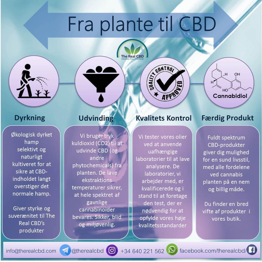 Fra plante til CBD