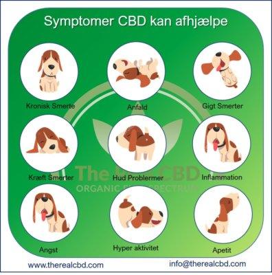 The Real CBD Infographics symptomer