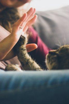 High five med en kat