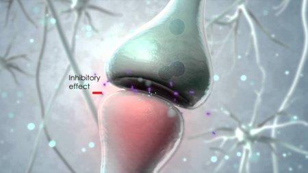 Endocannabinoide systemet