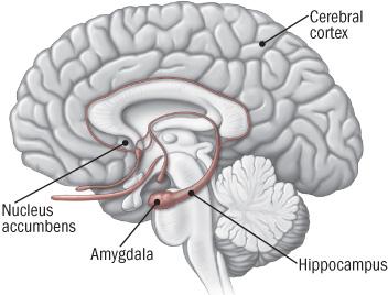 The Real CBD Hvordan kaprer afhængigheden vores hjerne?