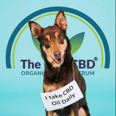 the-real-cbd-blog-er-det-sikkert-at-give-hunde-cbd-olie-fido