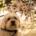 The-Real-CBD-Blog-Er-CBD-Olie-Sikkert-Til-Hunde