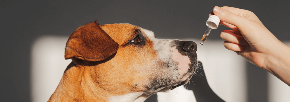Den Ultimative Guide om CBD til Hunde