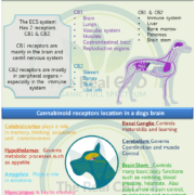 ECS system in dogs infographic