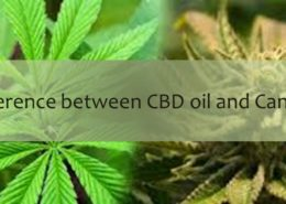 The difference between CBD oil and Cannabis oil