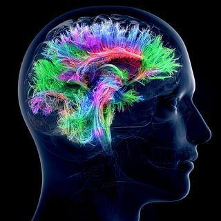 how does pain work brain work