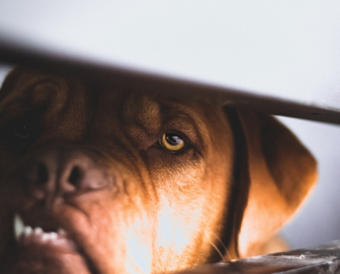 The-Real-CBD-Blog-CBD-Oil-for-Pets-with-Anxiety
