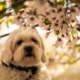 The-Real-CBD-Blog-Is-CBD-Oil-Safe-For-Dogs