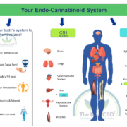 the-real-cbd-ecs-system