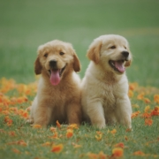 The-Real-CBD-blog-6-things-you-should-know-about-cbd-oil-for-pets