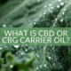What is CBD or CBG carrier oil The Real CBD