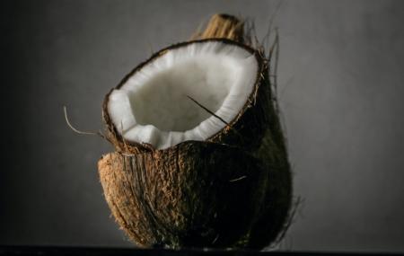 the-real-cbd-blog-coconut-oil