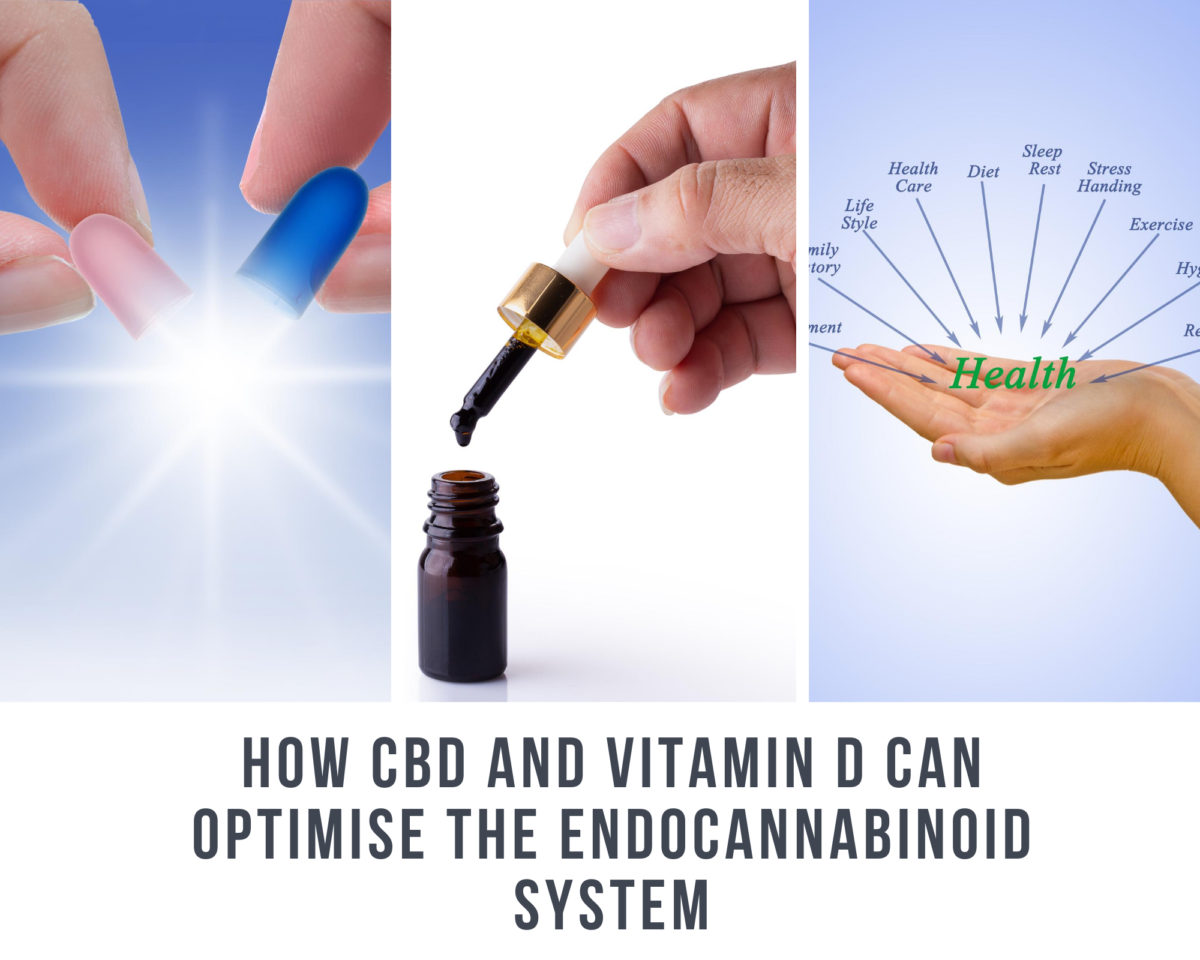 the-real-cbd-blog-how-cbd-and-vitamin-d-can-optimise-the-endocannabinoisd-system