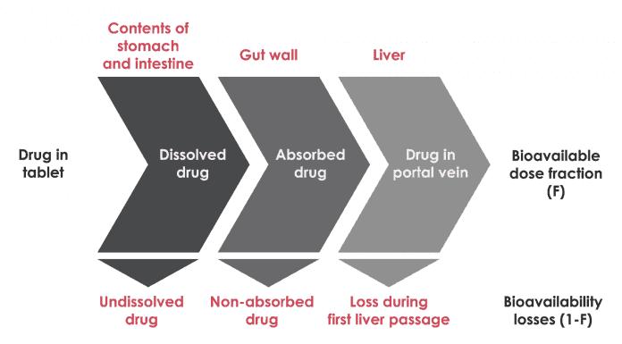 the-real-cbd-blog-cbd-and-nutricion-bioavailability