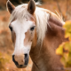 the-real-cbd-page-cbd-oil-for-horses-side-effects