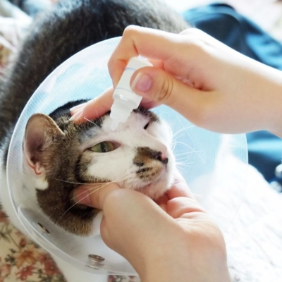 the-real-cbd-blog-cats-on-cbd