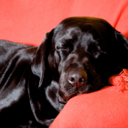the-real-cbd-blog-cbd-oil-for-pets