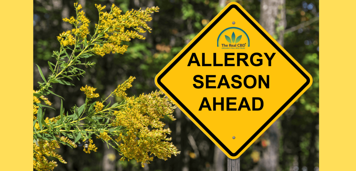 The-Real-CBD-Blog-Allergic to CBD oil Can CBD help with allergies