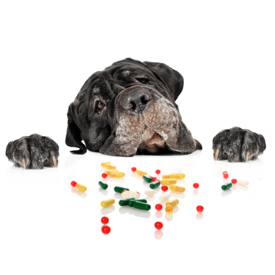 The-Real-CBD-Blog-Can-CBD-Oil-for-Dogs-Be-Used-With-Other-Medications