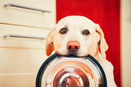 en comida de perros