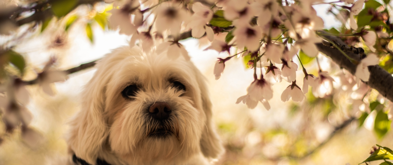Es seguro aceite de cbd para perros The Real CBD España