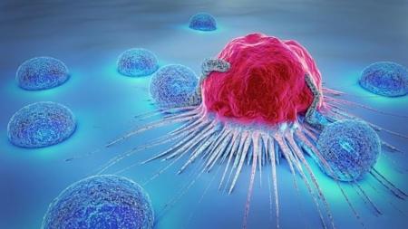 the-real-cbd-blog-cbd-para-cancer