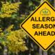 ¿Alergia al aceite de CBD? ¿Puede el CBD ayudar?
