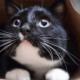 The-Real-CBD-Blog-CBD-para-gatos-con-ansiedad
