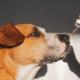 The-Real-CBD-Blog-La-Guis-Elemento-del-cbd-para-perros