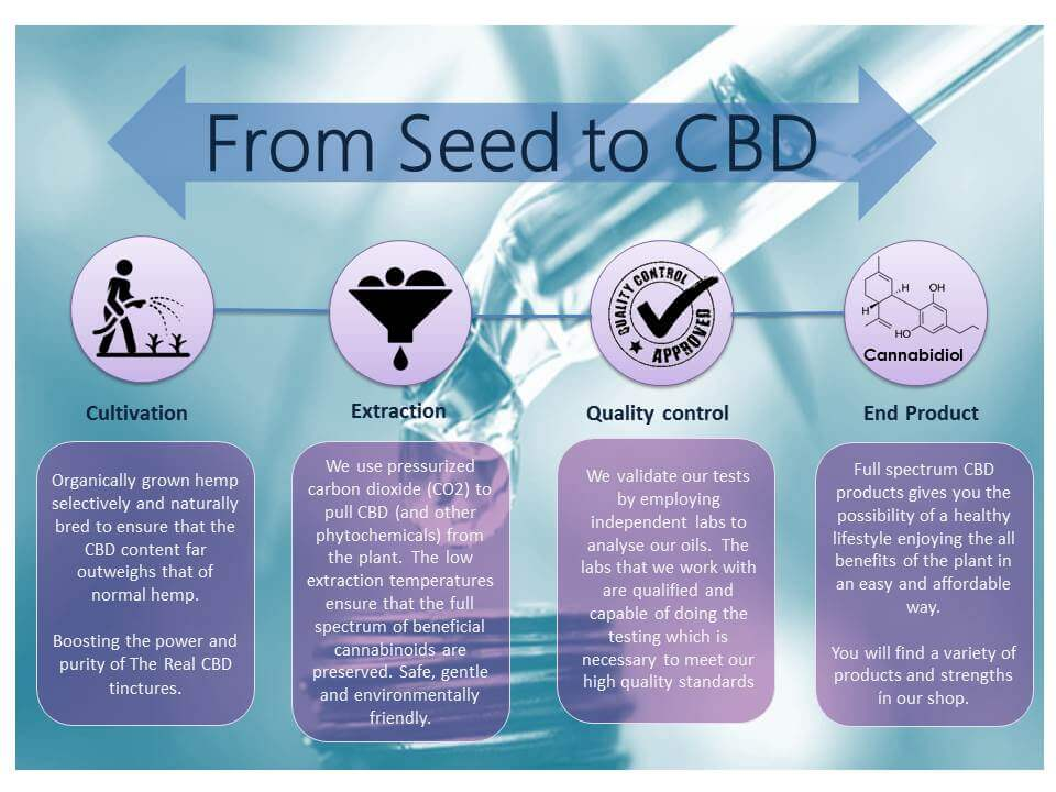 The Real CBD - Seed to CBD infographic